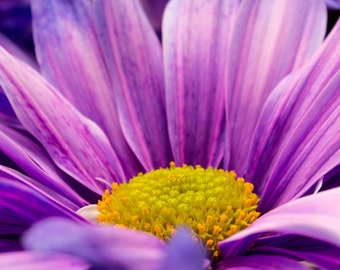 Purple Flower Photography, Wall Art, Home Decor, Close Up, Flower, Purple