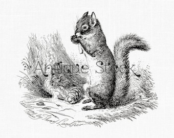 """Squirrel Clip Art """"American Red Squirrel"""" Instant Download Printable Image for Wall Art, Collages, Scrapbook, Prints, Paper Crafts..."""
