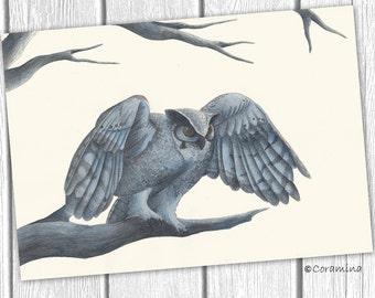 Original illustration owl
