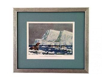 Framed Antique Penguins & Sea Elephant Lithograph