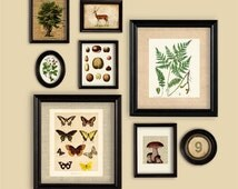 Woodland Theme Set Of Prints Wall Gallery Fern Mushroom Butterfly Deer Tree Walnut Wild Strawberry