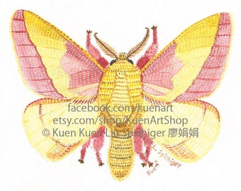Rosy Maple Moth, R is for Rosy Maple Moth, Watercolor/Painting/Illustration/Print, Entomology Bug Insect Science Art, Pink and Yellow Moth