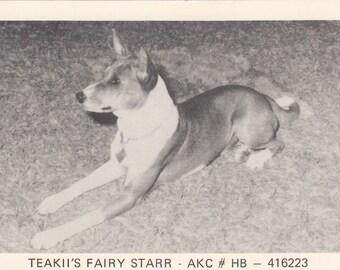 c1950 Real Photographic Postcard Championship Teakii's Fairy Starr Basenji Breed Dog