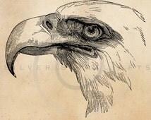 Vintage Bald Eagle Illustration Printable Birds 1800s Antique Print Instant Download Digital Image Clip Art Retro Black and White Drawing