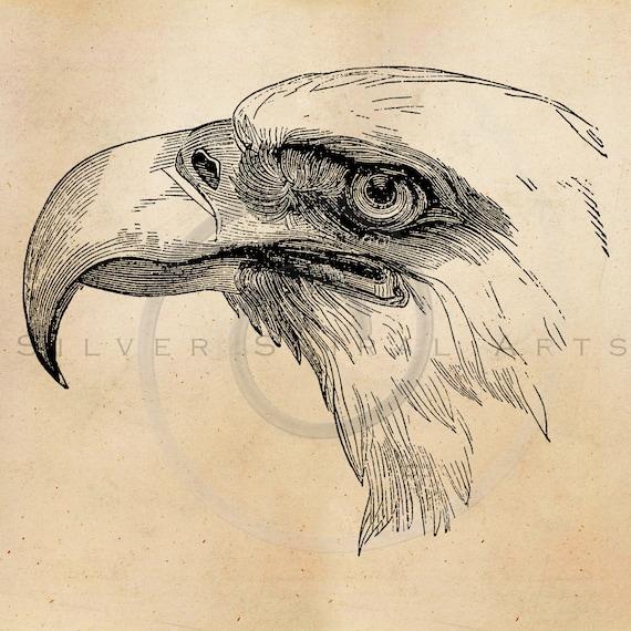 Items similar to Vintage Bald Eagle Illustration Printable ...