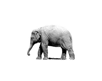 Black and White Photography - Elephant Photo, 24x36 20x30 16x20 8x10 5x7 fine art wall decor nursery wall art grey animal portrait picture