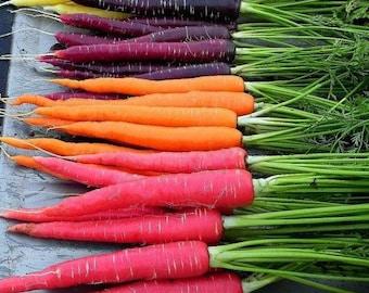 Carrot Rainbow Mix Vegetable Seeds (Daucus carota) 100+Seeds
