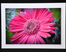 Note cards of Red Gerber Daisy note card set of 4, 4x6 image on 7x10 folded to 7x5 note card with envelope original photo art