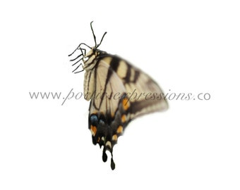 Realistic Butterfly Overlay Fine Art Photography for Composite Template Digital File Instant Download