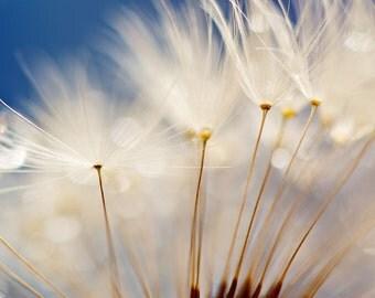Dandelion Photograph, Fine Art Print, Nature Photography, Nature, Wall Art, Flower Photograph, Small World