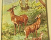 Vintage Children's Book - British Wld Animals - A Ladybird Book