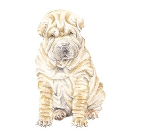 Sharpei Puppy Limited Edition Print 8.5x11 Watercolor Dog Pet Portrait