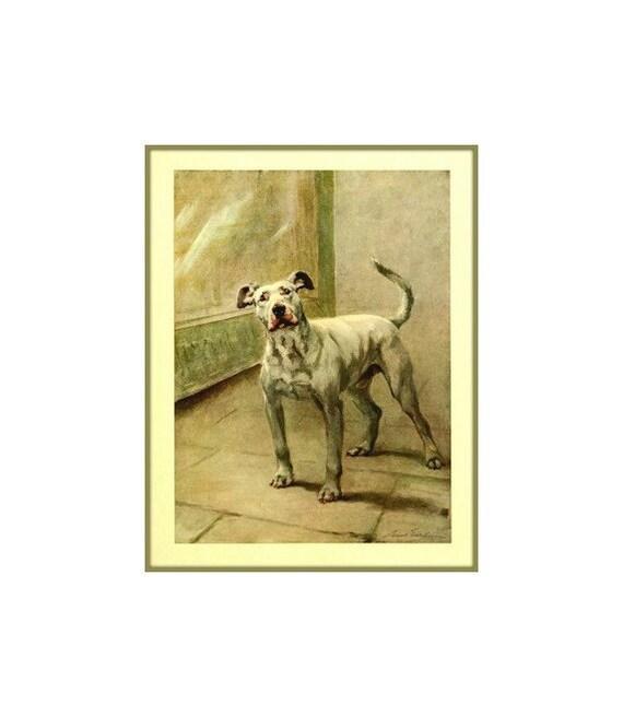 Liz Eckmann | Vintage dog, Pitbull terrier, Pitbulls  |American Pit Bull Terrier Vintage