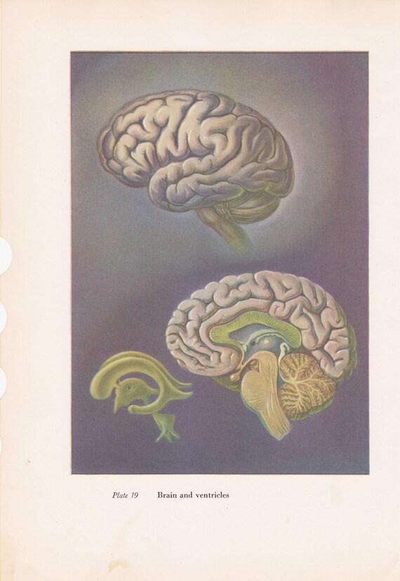 Human Anatomy Vintage Vintage Human Anatomy Print
