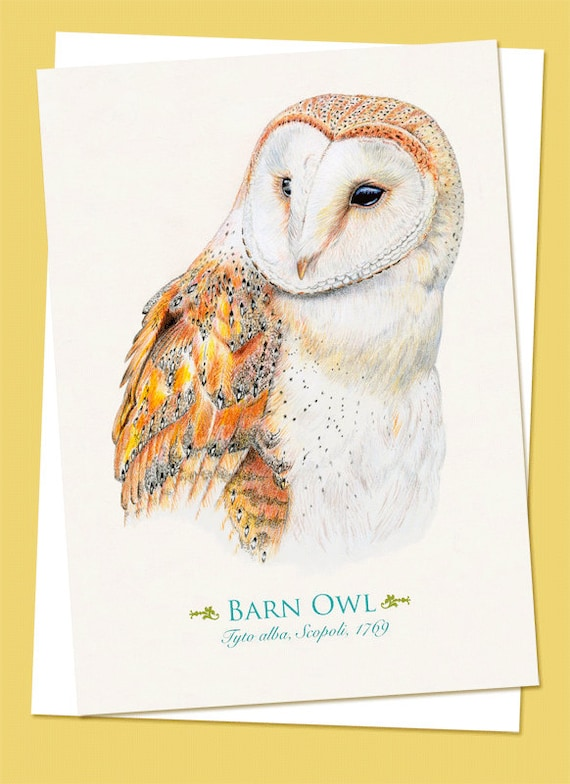 Barn Owl Birthday All Occasion Greeting Card 5 x 7 inches