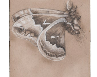 Promethea Moth 2, Greeting Card by Renae Taylor