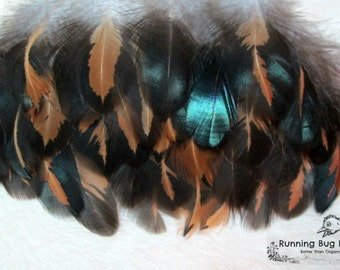 "Real Feathers Loose Feathers Natural Feathers For Crafts Golden Laced Cochin Rooster Feathers Real Bird Feathers Eco 25 @ 3 - 3.5"" / 7339"