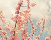 Cherry Blossoms - Dreamy Photography - Spring Decor - Nature Art Print - New York Photography - Blue and Pink - Fine Art Photography