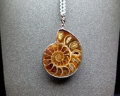 ammonite pendant necklace. stainless steel chain. fossil jewelry. mens accessories.