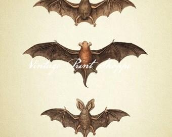 Bat Art print Scientific Illustration reproduction 5x7 print 8x10 print Home Decor Vintage Wall art Antique Bat print