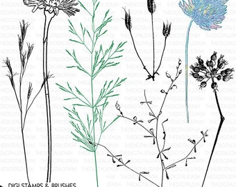 Dried Flowers - Weeds #1 - 7 Digital Stamps and Brushes - INSTANT DOWNLOAD - for Cards, Scrapbooking, Collage, Invites, Crafts and More