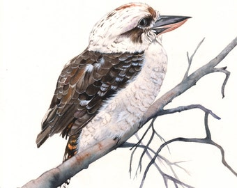 Kookaburra watercolor painting - PRINT of watercolor painting  A4 size print wall art print - bird art print