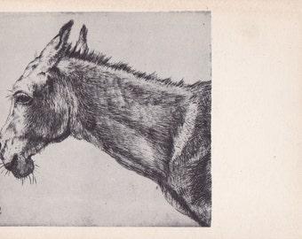 "Leandro Bassano ""Donkey"" Postcard -- 1962, Izogiz Publ."