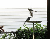 Metal Bird Feeder - Round Dish Tray feeder - platform bird feeder