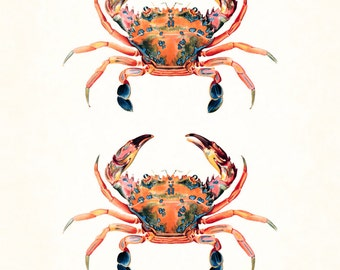 Vintage Crab Print, No. 10, Giclee, Art Print, Nautical Art, Coastal Decor, Wall Art, Illustration, Collage, Natural History Art, Crab Print
