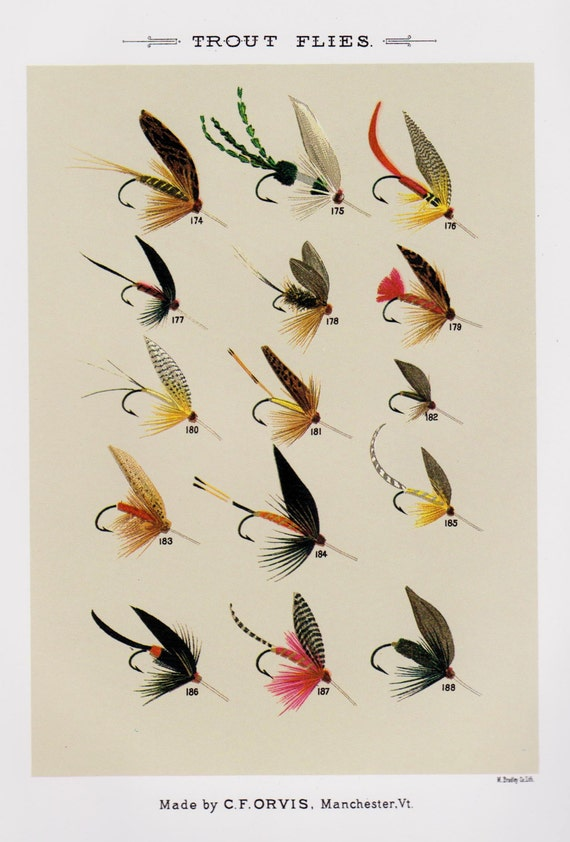 Fishing decor fly fishing print trout flies print by for Fly fishing decor