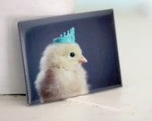 Chicken Wearing A Miniature Crown Rigid Rectangle Photo Magnet Chicks in Hats