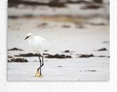 Beach Photography Snowy Egret Portrait Photo Print