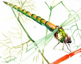 Yellow green pink dragonfly painting, 12x 9 in, original watercolor