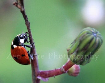 Lady Bug Wall Art Nature Photography Ladybug Print Red and Green Photography Unframed Photo Print Framed Photography Canvas Print Home Decor