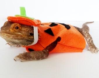 Bearded Dragon Clothing! Pumpkin!