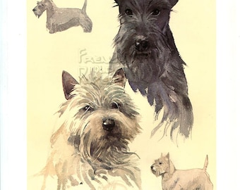 "West  Highland Terrier  and Scottish Terrier -  Dog vintage print 1975  -  8.1 "" x 11.6  inches - A11"