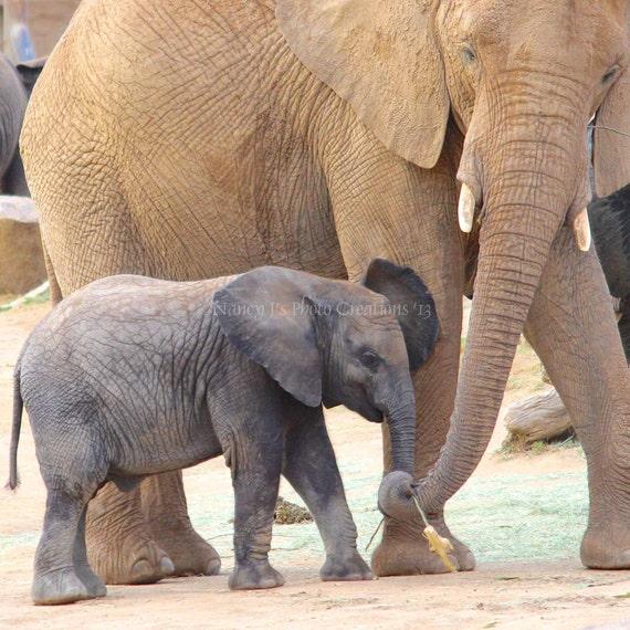 African Elephant Gift Nursery Decor Baby Animal Wall Art - photo#31
