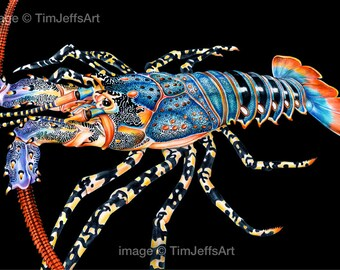 Rock Lobster Colored Pencil Drawing