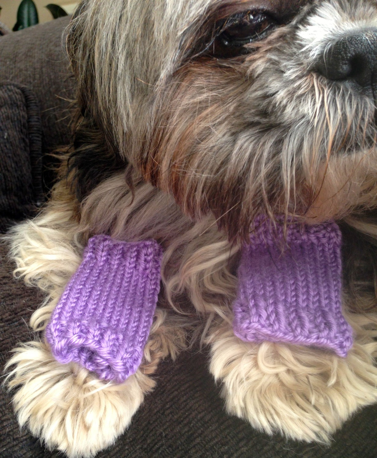 Dog Leg Warmers Knitting Pattern : Dog or Cat Leg Warmers Custom-knit and sized for your pet
