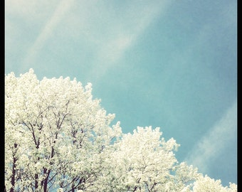 Flowering On High - Original Fine Art Photograph - Tree Blossoms