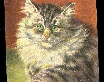 Signed M Stocks Tabby Kitten/Cat 1907 Postcard