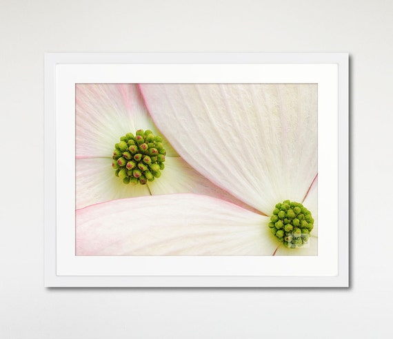 Dogwood Flower Print, Floral Photography, Two Pink Flowers, Wall Art Framed