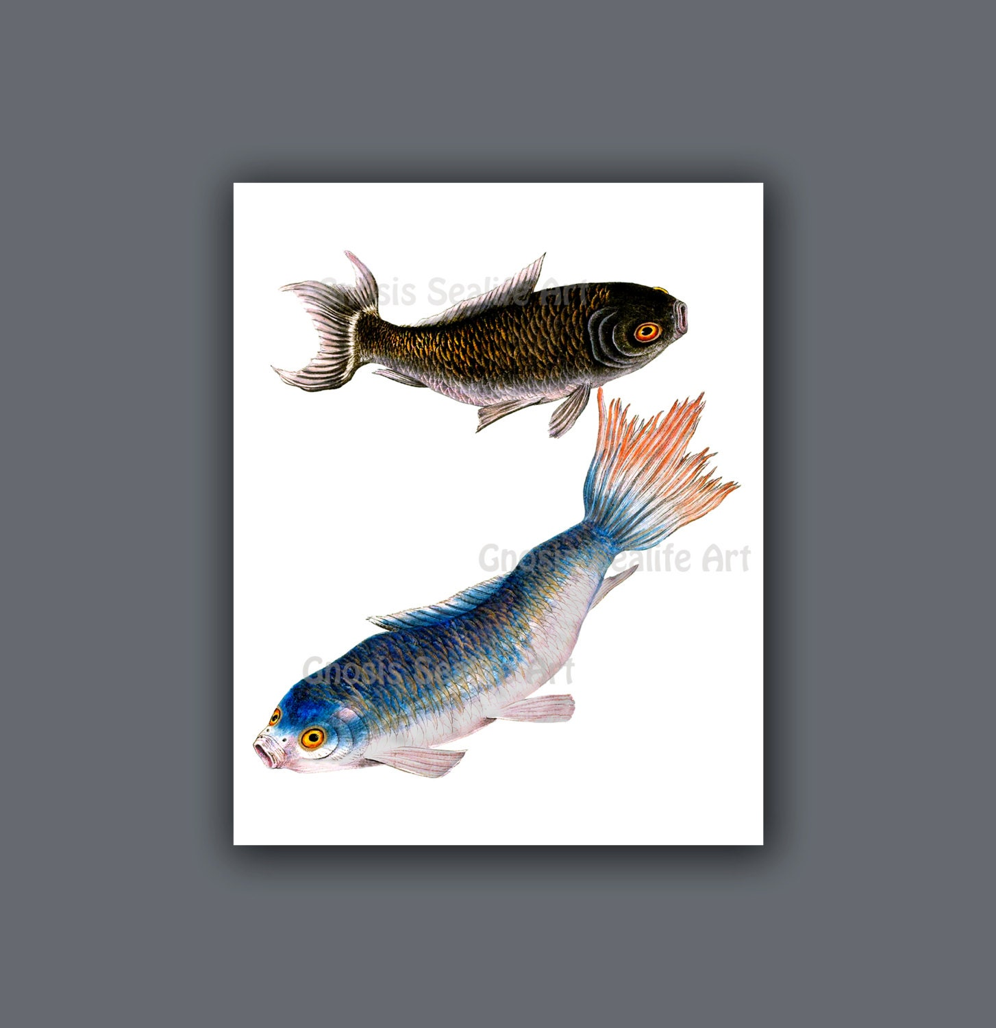 Antique fish art koi fish wall art print 5 symbol for love for Koi carp wall art