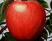Big Apple Painting 38X38 in. Square large red apple on canvas Huge oversized painting Close Up