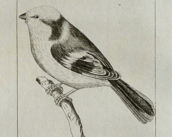1792 Antique print of an AZURE TITMOUSE BIRD. Ornithology. Tropical Birds. Exotic birds. 224 years old Buffon copper engraving