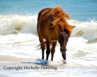 Assateague Horse - Horse Photography, Wild Horse Art, Horse Decor, Summer Horse, Ocean Horse, Wild Horse Photography, Horse on Beach, Nature