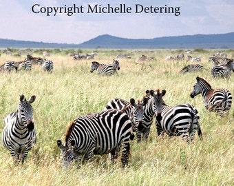 Zebrascape- Digital Photography, Zebra Photography, Zebra Art, Zebra Herd, Safari Art, Zebra Decor, Zebra Wall Art, Africa Animals, Wildlife
