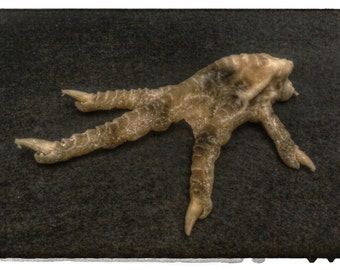 Mummified chicken foot