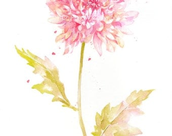Fine art watercolor painting, flower art, yellow, pink, CHRYSANTHEMUM, WATERCOLOR PRINT, giclee print, flower interest