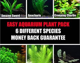 6 Live Aquarium Plant Species Package - Various Kinds - Anacharis, Amazon and more!